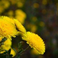 Жёлтое. :: Мария