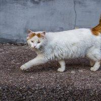 Кошечка :: Николина Вишнякова