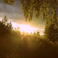 Вечернее солнце :: galina tihonova