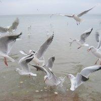 Чайки не кричите,сердцу больно! :: Ирина Нафаня