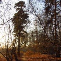 IMG_5492 - Ноябрьские тени :: Андрей Лукьянов