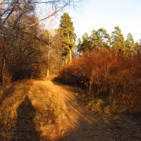 IMG_5501 - Сливаюсь с Природой :: Андрей Лукьянов