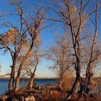 Улетели листья :: Dr. Olver  ( ОлегЪ )