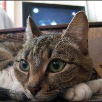 Лежу на диване, да думку гадаю - зачем философией люди страдают :: muh5257