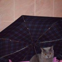 кажется дождь собирается :: Лариса *