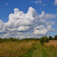 За грибами под облаками :: - Hombrecillo