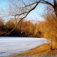 Радужный пруд в ноябре :: Наталья Лакомова