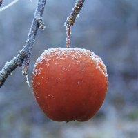 мороженное яблоко :: Вадим Виловатый
