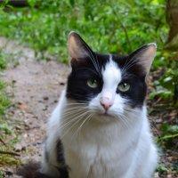 уличная кошка :: Ирина Пономарева