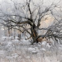 В плену белого безмолвия... :: Андрей Войцехов