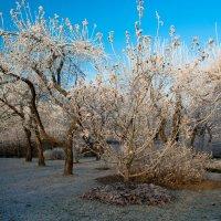 Дыхание зимы :: Олег