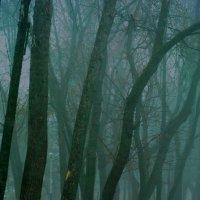 Ранним утром в парке :: Евгения Кирильченко