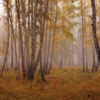 Осенний березовый лес. Туман :: Людмила Якимова