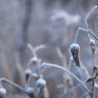 зима близко :: ira