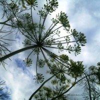 Доисторические деревья :: Инна Буяновская
