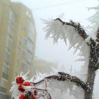 Колючки :: Наталья Дмитриева
