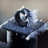 Морозное утро... :: Дмитрий Гортинский