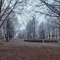 чёрно-белая осень :: Вадим Мирзиянов