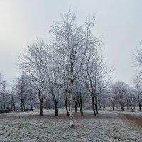 последние дни ноября :: Вадим Мирзиянов