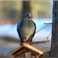 на страже :: linnud