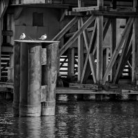 под старым мостом :: ник. петрович земцов