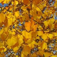 Осень в Евпатории. :: Ирина Нафаня