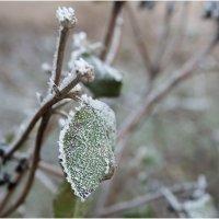 Морозное дыхание питерского утра :: Борис Борисенко