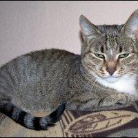 Иногда выругаешь кошку, взглянешь на неё, и возникает неприятное ощущение, будто она поняла :: muh5257