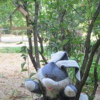 Заяц нашего двора :: Самохвалова Зинаида