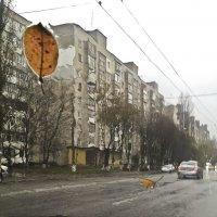 Ноябрьское настроение ... :: Ольга Винницкая (Olenka)