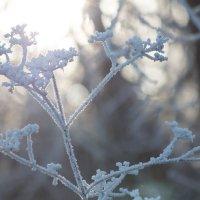 Морозным утром :: Мария Зайцева