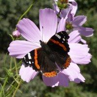 Бабочка и цветок. :: Чария Зоя