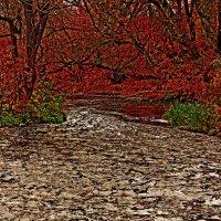 Необыкновенная осень :: Максим Бухонский