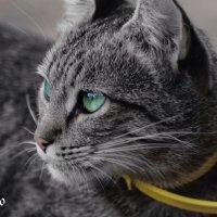 Кошак :: Lasc1vo Артёмин