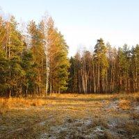 В ожидании зимы :: Андрей Снегерёв