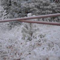 За холодной сталью... :: Kristina Shatlova