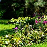 Цветочная поляна :: Ксения Базарова
