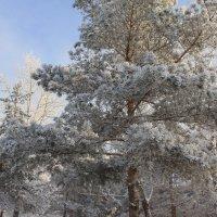 Так и чувствуется сильный мороз :: Savayr