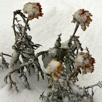 Не страшны нам снег и первые морозы :: Владимир Максимов