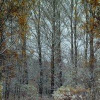 Тропинка в зиму :: Евгения Кирильченко