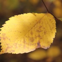 Осень :: Дмитрий Фадин