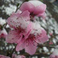 весенний снег :: Полина Луговенко