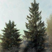 холодный туман :: Анна Никонорова