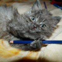 маленький кот :: Кристина Воробьева