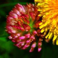 Лютики цветочки... :: Gimp Fanat Евгений Щербаков