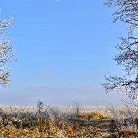 Морозное утро :: Мария Богуславская