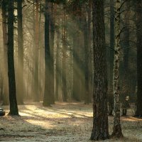Утро в лесу :: Светлана Григорьева