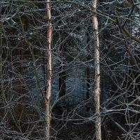 Deep in the forest :: Татьяна Суетина