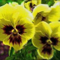 Воспоминания об фиалках летних нас зимою согревают... :: muh5257