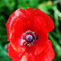 Цветок :: Damir Si